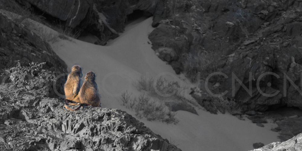 2 monkeys in sun